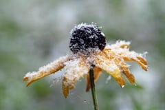Tidiga snowfall i höst royaltyfri foto