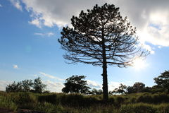 tidigare dimmig morgonsilhouettetree Arkivbilder