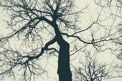 tidigare dimmig morgonsilhouettetree arkivbild