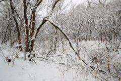 Tidigt av vintern Arkivbilder