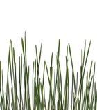 tidigt gräs Arkivfoto