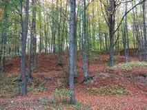 Tidigt höstskoglandskap Arkivfoton