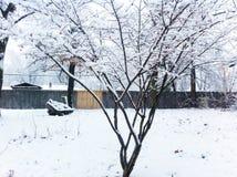 Tidigt snöfall Arkivbild