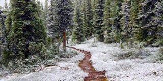 Tidigt snöfall Jasper National Park Arkivbilder