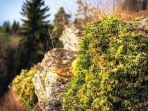 Tidigt Spring Hill landskap i den Franconian schweizaren Royaltyfri Fotografi