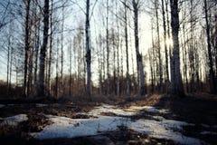Tidigt vårlandskap av snön Arkivfoton