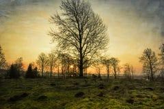 Tidigt wintermorning royaltyfri foto