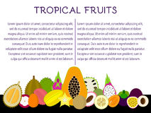 Tidskriftmall för tropiska frukter Fotografering för Bildbyråer