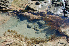 Tidvattenpölen mellan trälilla viken och pärlagatan sätter på land, Laguna Beach, CA Royaltyfri Bild