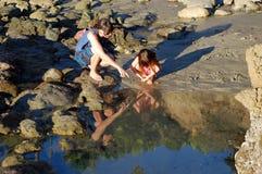 Tidvattenpölutforskning nära fågel vaggar, Laguna Beach, CA Royaltyfri Foto