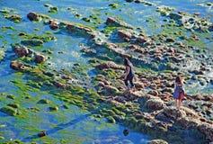 Tidvattenpölutforskning nära fågel vaggar, Laguna Beach, CA Arkivfoto