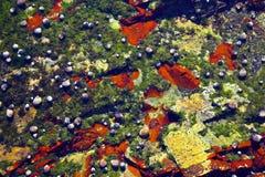 tidvattens- gemenskaper Arkivfoto