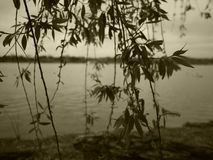Tidvattens- handfat i Sephia Royaltyfri Foto