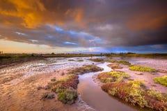 Tidvattens- kanal i bred flodmynningmarsklan på soluppgång Royaltyfria Bilder
