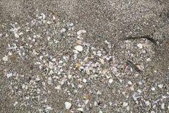 Tidvattens- långhalsar på havssanden Arkivbild