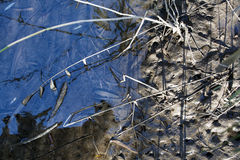 Tidvattens- områdesbakgrund Royaltyfria Foton