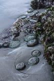 Tidvattens- pöl nära Tofino arkivfoton