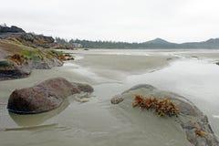Tidvattens- pölar Arkivbilder