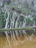 tidvattens- reflexionsflod royaltyfri fotografi