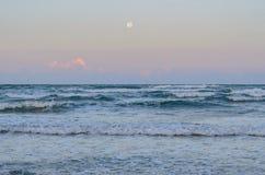 tidvattens- tråkmåns Arkivfoton