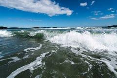 tidvattens- tråkmåns Arkivbild