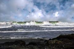tidvattens- wave Royaltyfri Fotografi