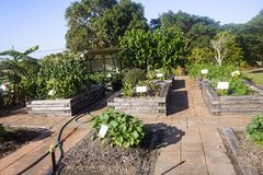 Community vegetable garden with wheelchair access. Tidy community vegetable garden in boxes with paths for wheelchair access royalty free stock image