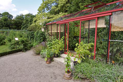 Tidy Greenhouse. Clean and tidy greenhouse in lush surroundings stock photo