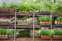 The tidy Potted flowers on shelves Stock Photography