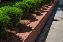 Tidy red brick retaining wall lined with boxwoods alongside a sidewalk. Horizontal aspect royalty free stock image