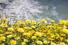 Tidytips en goudvelden die op de Vreedzame Oceaankust in Mori Point, Pacifica, de baai van San Francisco, Californië bloeien stock fotografie