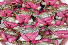 Tied crabs Stock Photos
