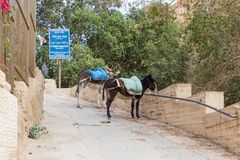 Tied donkeys with saddles stand near the gate of the monastery of St. George Hosevit Mar Jaris in anticipation of tourists near. Near Mitzpe Yeriho, Israel Royalty Free Stock Image