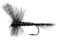 Tied Dry Fly. A tied dry fly for trout fishing Stock Illustration