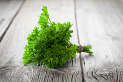 Tied fresh parsley Stock Image
