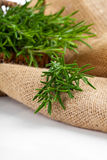 Tied fresh rosemary on the burlap Stock Images