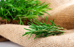 Tied fresh rosemary on the burlap Royalty Free Stock Images