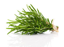 Tied fresh rosemary Royalty Free Stock Image