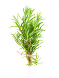 Tied fresh rosemary Stock Photography