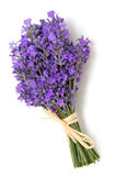 Tied lavender Stock Photography