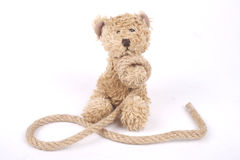 Tied teddy bear Royalty Free Stock Photo