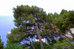 Tied trees overhanging beach,Monaco Stock Photos