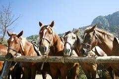 Tied up horses at sunny day Royalty Free Stock Photo