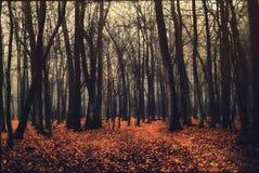 Tief in den dunklen Wald lizenzfreies stockbild