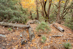 Tief in der Waldfläche 2 stockbild
