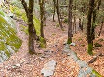 Tief in der Waldfläche 3 stockfotos