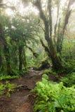 Tief im üppigen nebeligen Regenwald Stockfoto