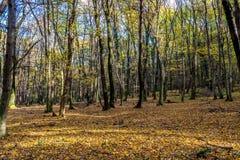 Tief im bunten Herbstwald im November, Bratislava, Slowakei lizenzfreie stockfotos