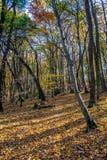 Tief im bunten Herbstwald im November, Bratislava, Slowakei lizenzfreie stockbilder