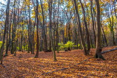 Tief im bunten Herbstwald im November, Bratislava, Slowakei stockfotografie